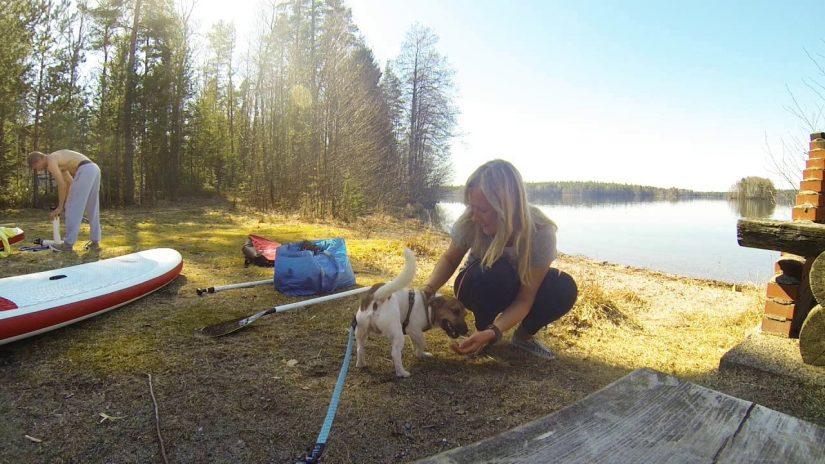20.4.2014 Sääksjärvi. SUP with My PUP - Jack Russell :) | aquasport.tv