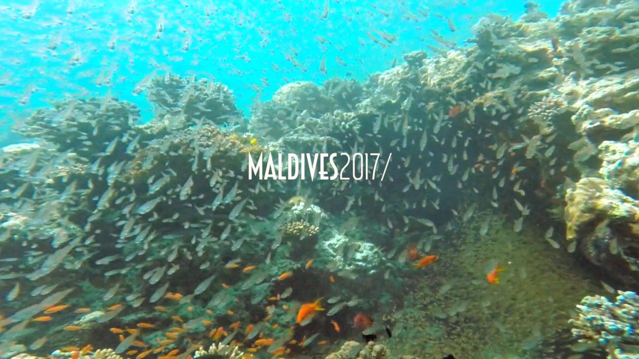 MALDIVES, Alifu atoll with sharks and mantas