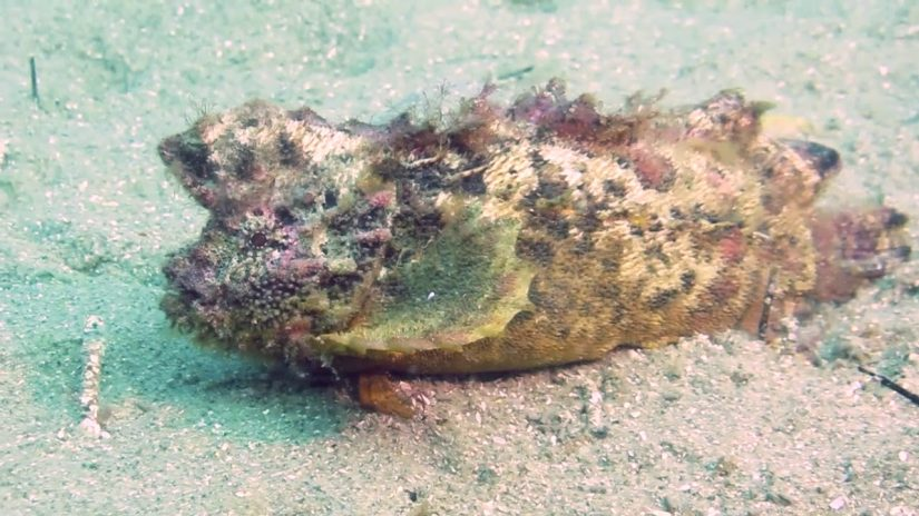 Funny Fish Walking Across Ocean Floor | aquasport.tv
