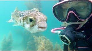When your BEST FRIEND is a PUFFERFISH | aquasport.tv