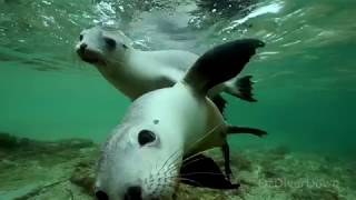 Slowing-down-with-Sea-Lions